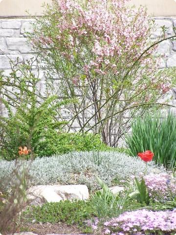 В городе весну можно и пропустить, если не было бы цветников и цветочников. Предлагаю вспомнить весну и возможно поучаствовать в озеленении своего города. фото 18