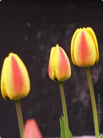 В городе весну можно и пропустить, если не было бы цветников и цветочников. Предлагаю вспомнить весну и возможно поучаствовать в озеленении своего города. фото 23