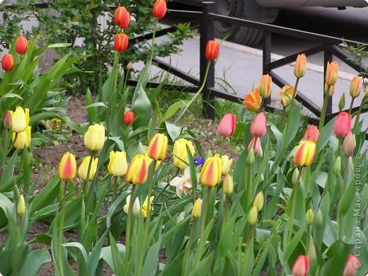 В городе весну можно и пропустить, если не было бы цветников и цветочников. Предлагаю вспомнить весну и возможно поучаствовать в озеленении своего города. фото 25