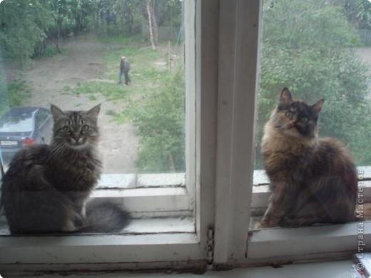 Две девицы под окном..... фото 1