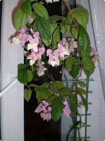 Цветет до сих пор! фото 1