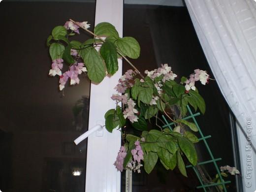 Цветет до сих пор! фото 2
