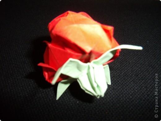 Оригами: Кавасаки роз фото 2