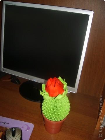 Оригами модульное: Цветочки кактусы фото 2