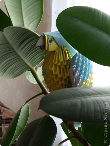 Оригами модульное: Попугайчик фото 4