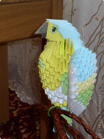 Оригами модульное: Попугайчик фото 5