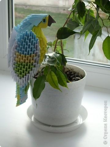 Оригами модульное: Попугайчик фото 1