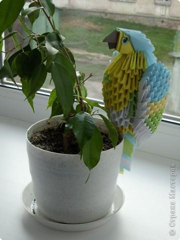 Оригами модульное: Попугайчик фото 3