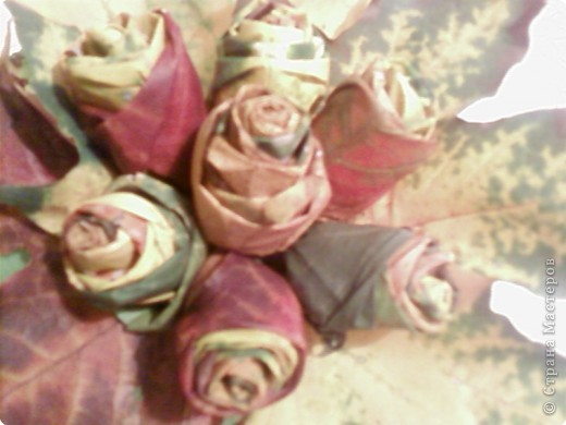 Розы для воспитательницы фото 2