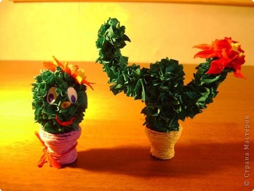 Друзья- кактусы. =) фото 1