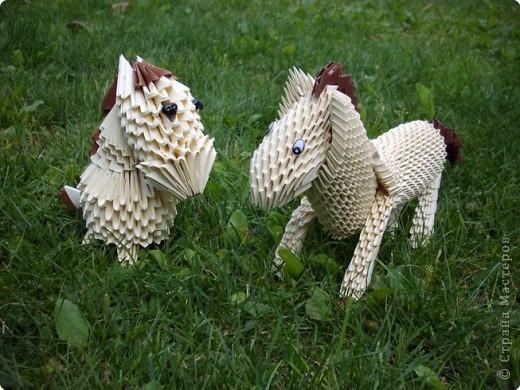 кони на лугу фото 1