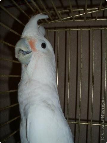 Яванская макака - Ивашка фото 15
