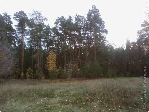 Каждый год осенью и весной я с моим классом (с детьми и их родителями) выезжаем на природу. Бываем в разных местах Татарстана. В этом году побывали в Марийской республике на озере Кичиер. фото 2