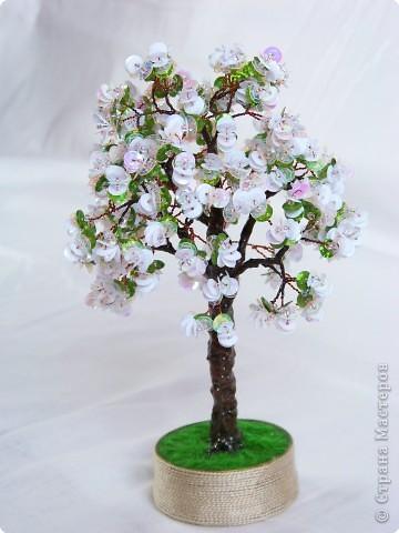 Яблонька. Почему-то в жизни эти деревца смотрятся намного выигрышнее.