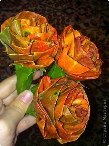 осень. розы -  листья хурмы и лавра фото 3