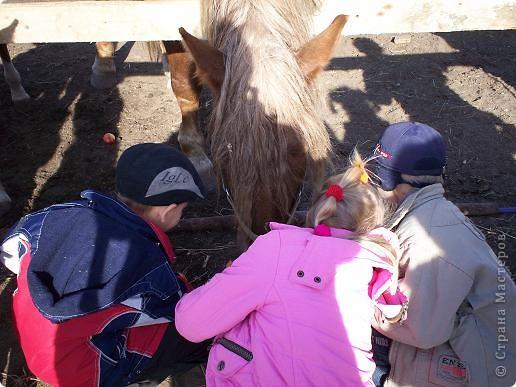Сами побывали лошадками фото 2