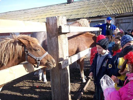 Сами побывали лошадками фото 3