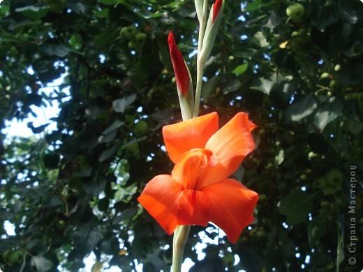 Добро пожаловать в мой сад! фото 4