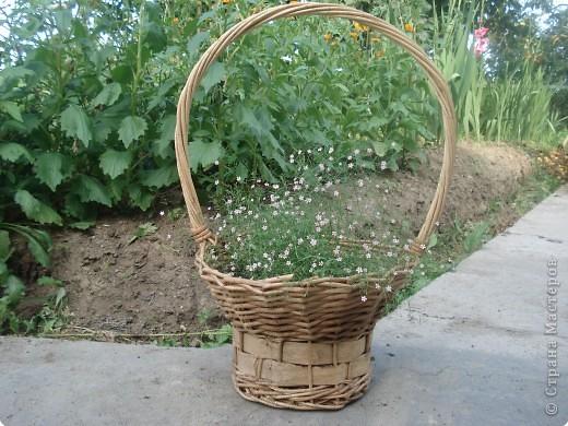 Добро пожаловать в мой сад! фото 5