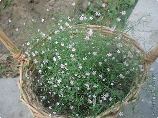 Добро пожаловать в мой сад! фото 6