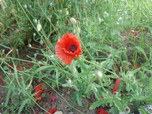 Добро пожаловать в мой сад! фото 7