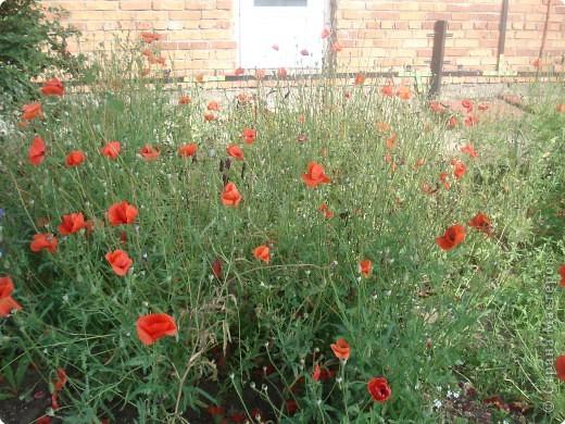 Добро пожаловать в мой сад! фото 8