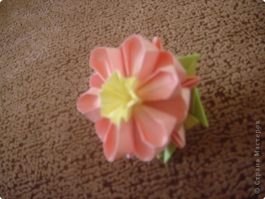 мой первый кактус )))) фото 3