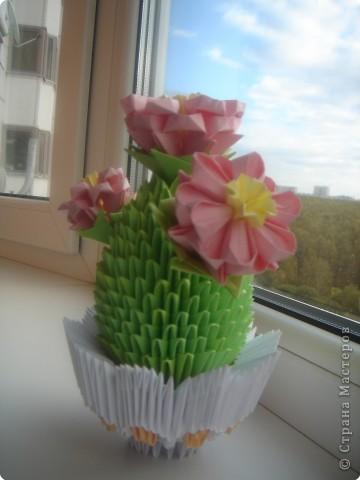 мой первый кактус )))) фото 1