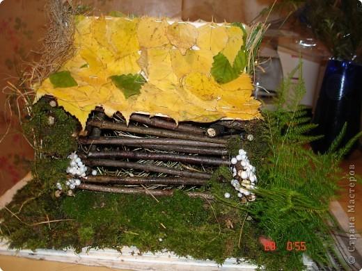 Леший и его лесной домик. фото 2