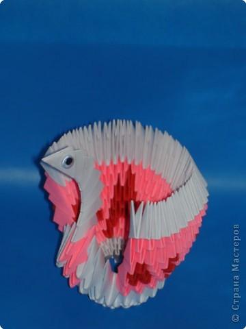 Птица павлин! фото 2