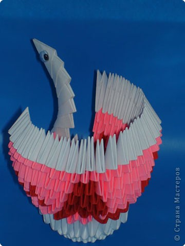 Птица павлин! фото 3