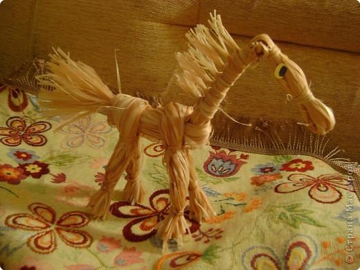 Коняшка фото 2