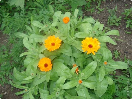 Добро пожаловать в мой сад! фото 10