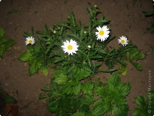 Добро пожаловать в мой сад! фото 11