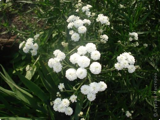 Добро пожаловать в мой сад! фото 12