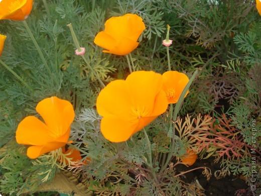 Добро пожаловать в мой сад! фото 13