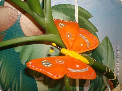 Не определена: Бабочка фото 3