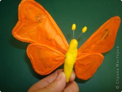 Не определена: Бабочка фото 2