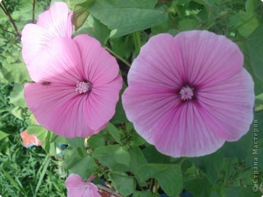 Добро пожаловать в мой сад! фото 21