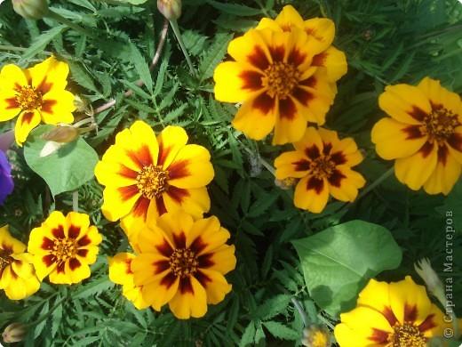 Добро пожаловать в мой сад! фото 1