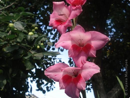 Добро пожаловать в мой сад! фото 3