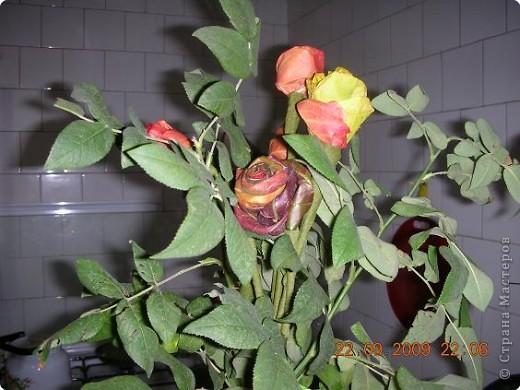 Розы из листьев, листья шиповника. фото 1