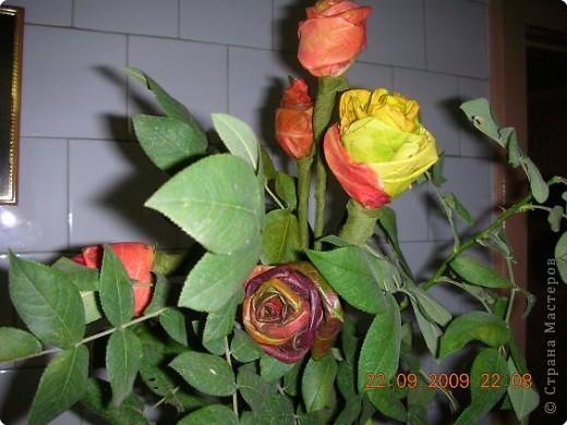 Розы из листьев, листья шиповника. фото 2