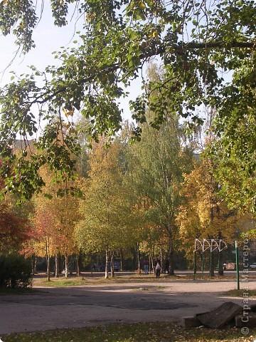"""Осень в парке """"Сосновка"""" г. Санкт-Петербург фото 2"""