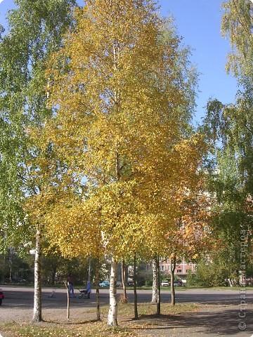 """Осень в парке """"Сосновка"""" г. Санкт-Петербург фото 1"""