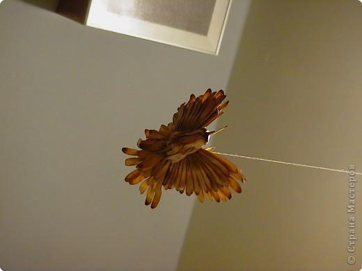 Вот такие птицы зимуют в нашем доме. Сделаны они из ясеневых(?) семян, пластилина, зернышка пшенки (для глаз) и подвешены на люстру за ниточку. фото 3