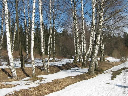 Проталины. фото 2