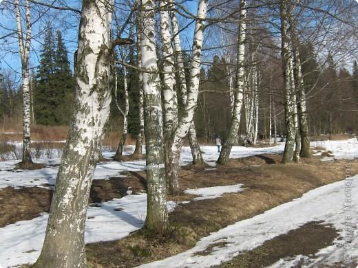 Проталины. фото 6