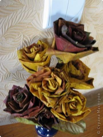 И вновь кленовые розы фото 3