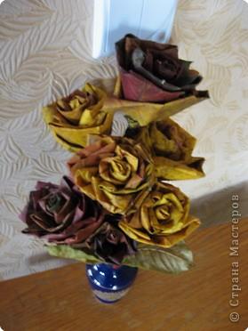 И вновь кленовые розы фото 4